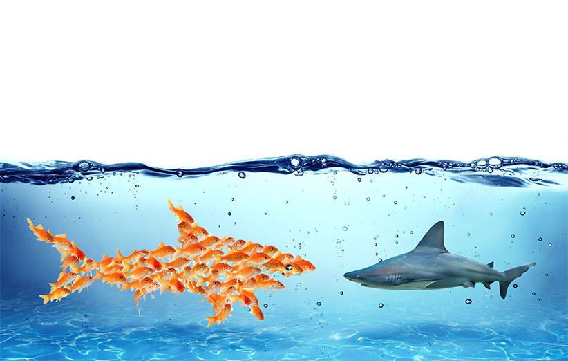 تیم سازی استارتاپها و چالشی بزرگ، عاملی مخرب یا محرک؟